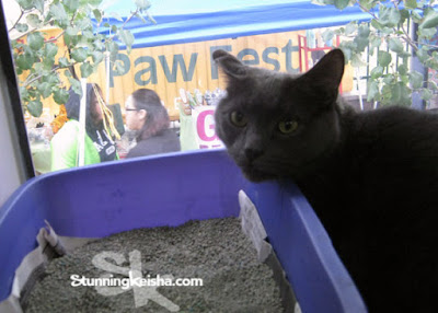 Paw Fest, Blog the Change
