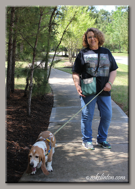 Woman walking senior basset hound