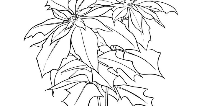 top 10 poinsettia coloring page for kids