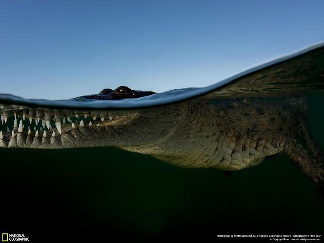 National Geographic - Brett Lobwein - Avustralya