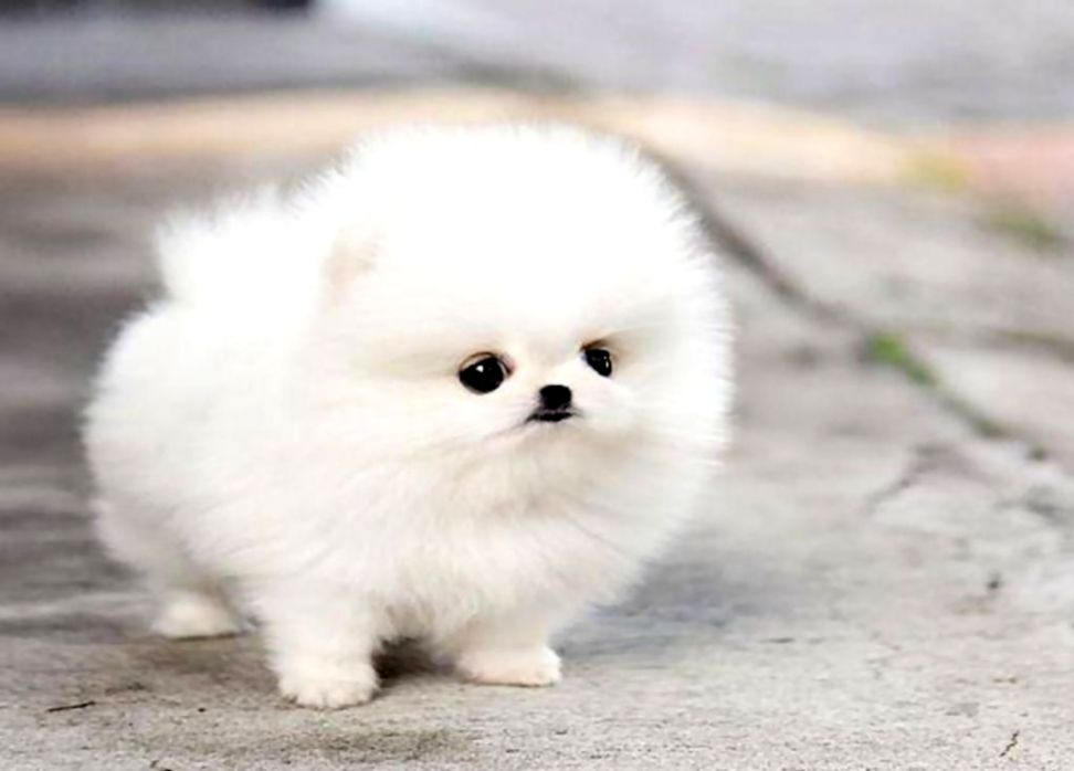 Dogs Puppies Wallpapers