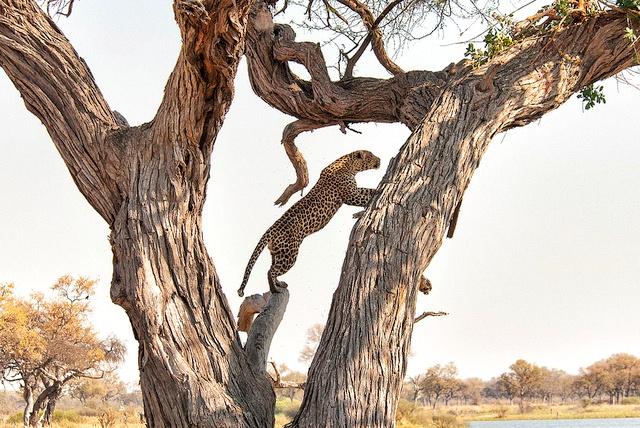 Linyanti Wildlife Reserve,Botswana