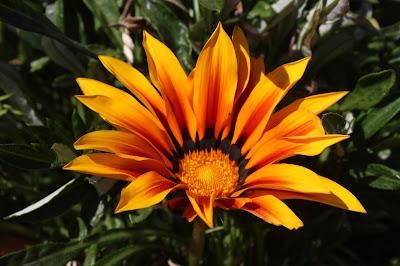 Flower YellowOrange Original