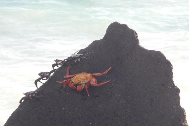 Gardner Bay crab