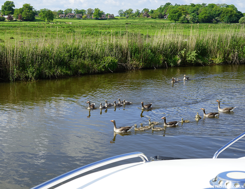 Wildlife sightings on the Norfolk Broads