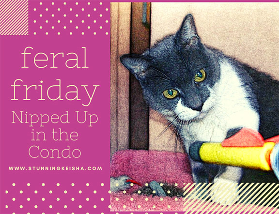 Feral Friday: Nipped Up in the Condo