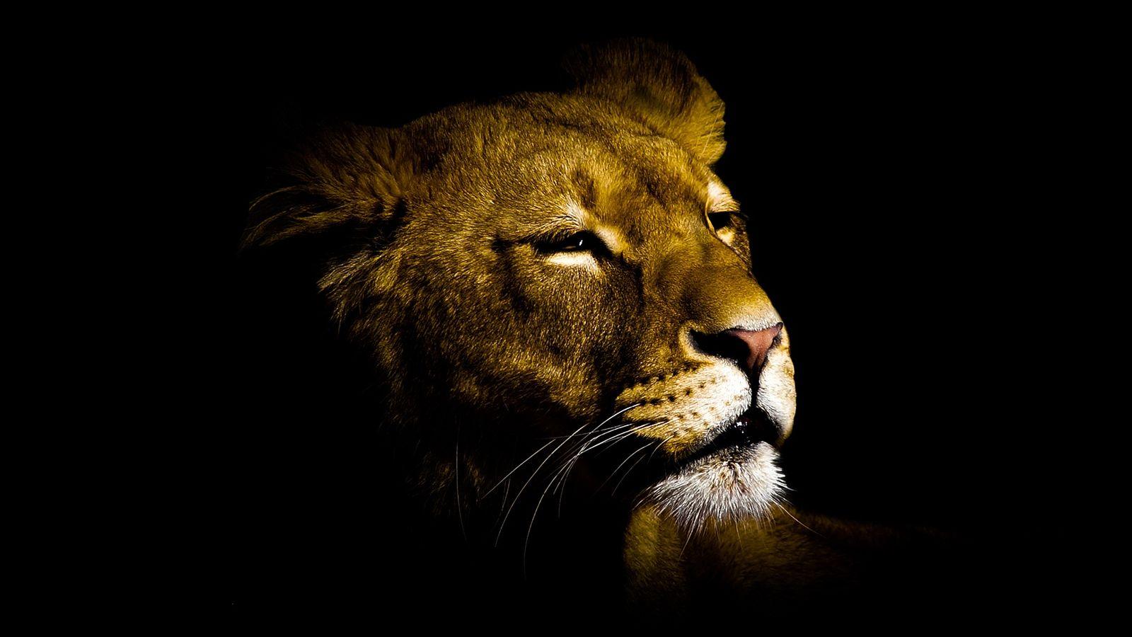 Mac Os Lion Fond D Ecran Hd Notcomptelro Ml