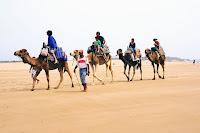 Изображение каравана верблюдов в Эс-Сувейра, Марокко