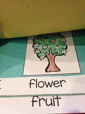 Apple Life Cycle Step Book from All About Apples unit- Time4Kindergarten
