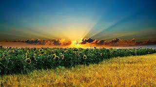 MAHKUM ALAIH dan AL-HAKIM serta PERMASALAHANNYA, AL-AHKAM , USHUL FIQIH PENGERTIAN IJMA'AL- IMAMAH DAN AR- RA'UYAH,