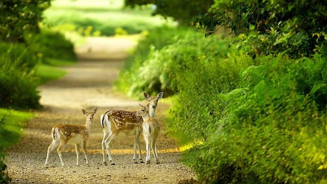 नेचर इमेज गैलरी पिक्स पिक्चर प्राकृतिक सौंदर्य इमेज