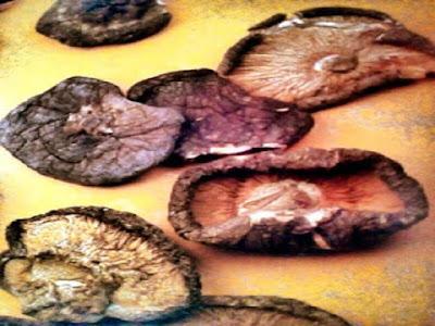 Gambar 5 Manfaat Jamur Hioko Untuk Mengobati Penyakit