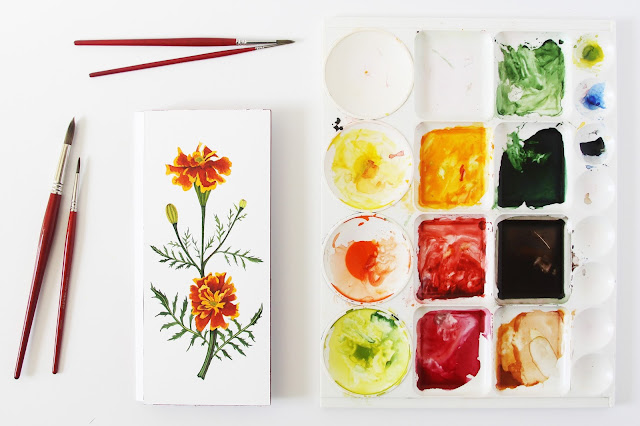 watercolor, painting, botanical art, botanical watercolor, marigolds, watercolor marigolds, Anne Butera, My Giant Strawberry