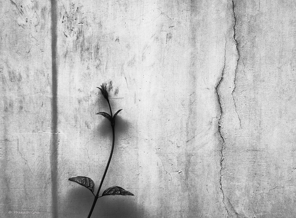 A minimalist photo of a plant leaning against a textured cracked wall.