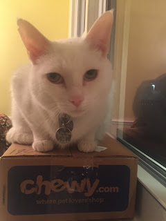 Cat on top of Chewy.com Box