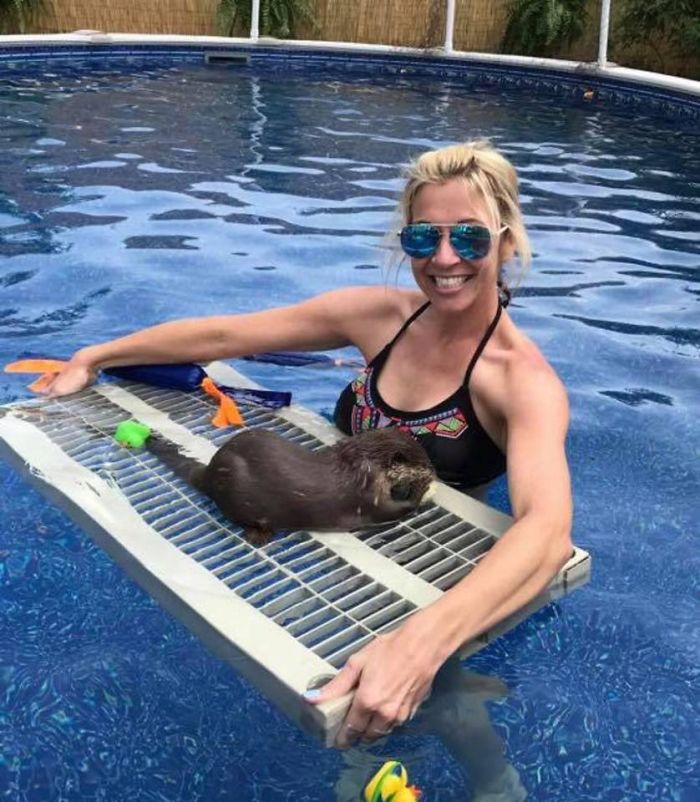 Animal Preserve Allows People To Swim With Adorable Tiny Otters