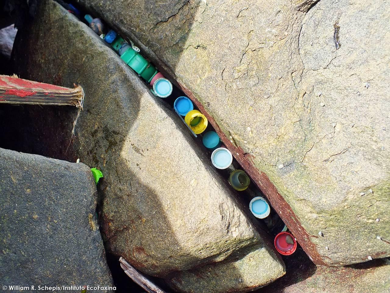 O plástico se acumula em ecossistemas costeiros como manguezais, praias e costões rochosos, causando graves impactos à fauna marinha. Crédito: William R. Schepis/Instituto EcoFaxina
