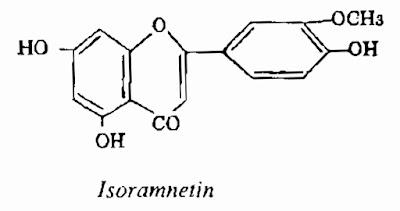 Thành phần hóa học Cây Cỏ Nến - Typha orientalis - CẦM MÁU
