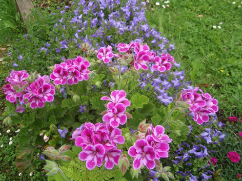 color en el jard n todo el a o plantas que florecen en mayo