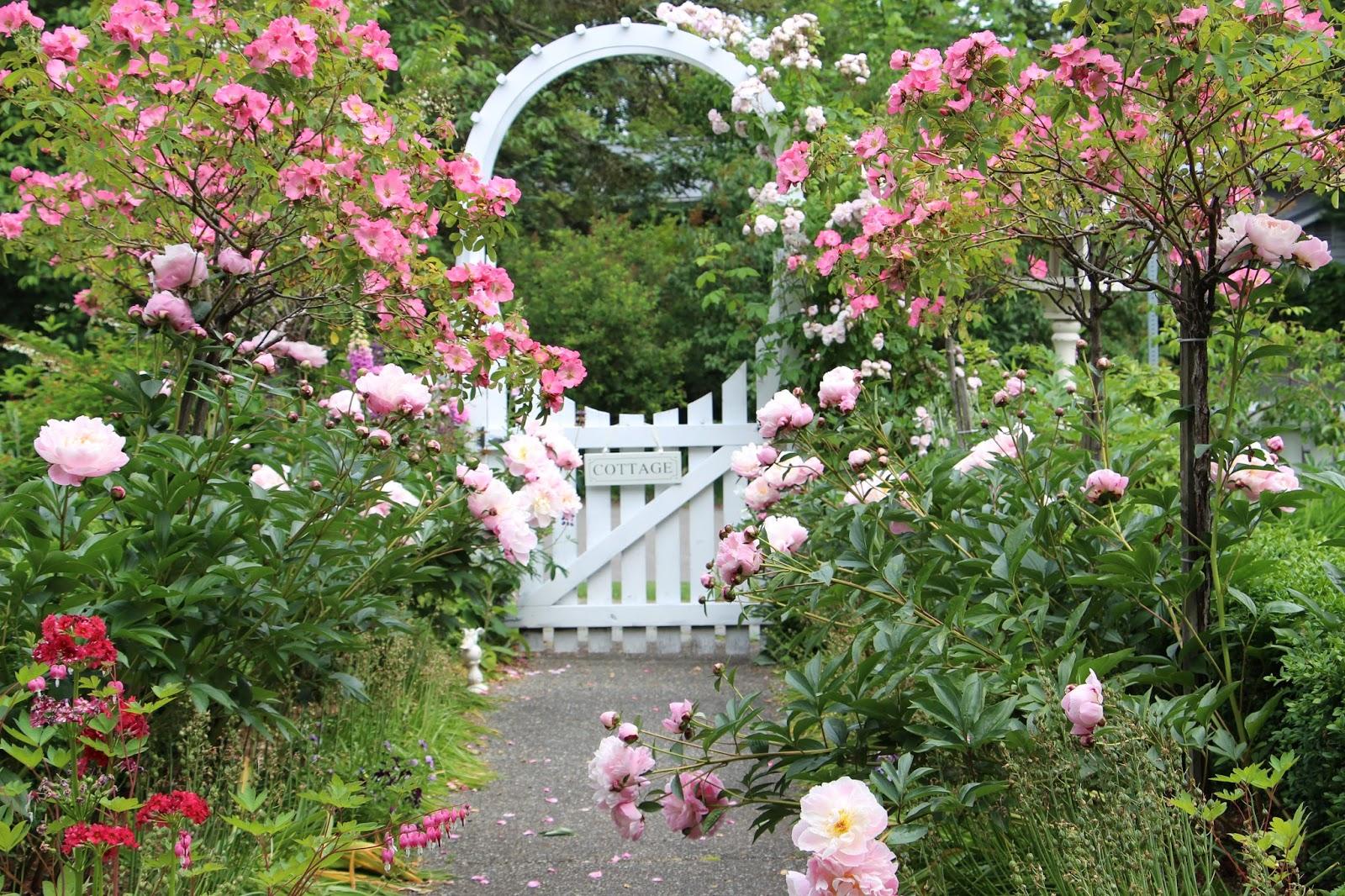 Fishtail Cottage: Fishtail Cottage Garden 5/25/15 on Cottage Patio Ideas id=70851