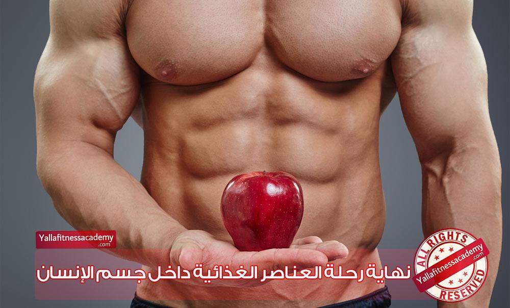 نهاية رحلة العناصر الغذائية داخل جسم الإنسان