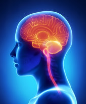 illuminated human brain