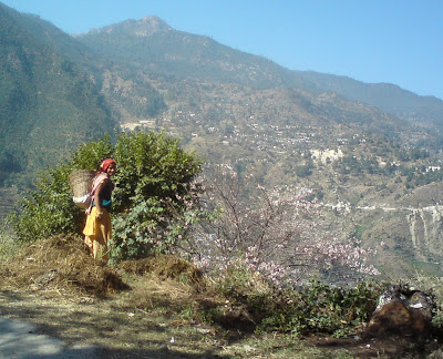 Pretty and shy village woman on the Himalyan roadway to Badrinath