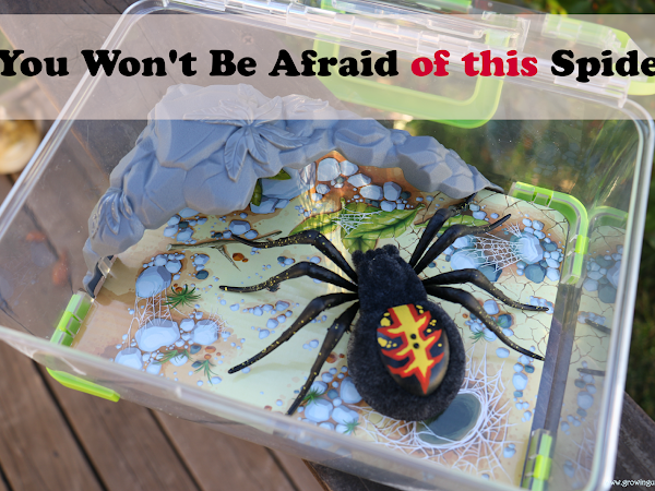You Won't Be Afraid of This Spider
