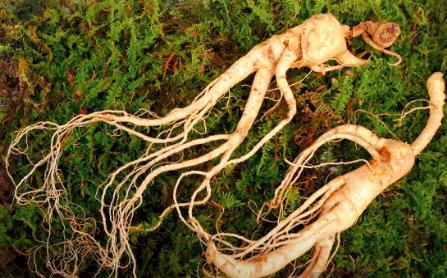 african herbs for enlargement