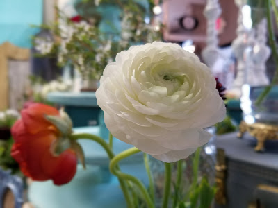 florist, ranunculus, fresh flowers, peachtree City, newnan, fayetteville, senoia, weddings, events, movie studio