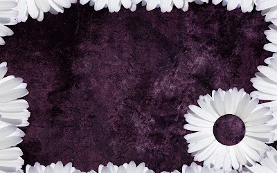 Purple Daisy Tumblr Backgrounds.jpg