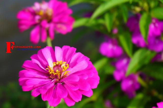 Foto Makro Bunga dengan Background Blur Yang Diambil Menggunakan Lensa Kit 16-50 mm