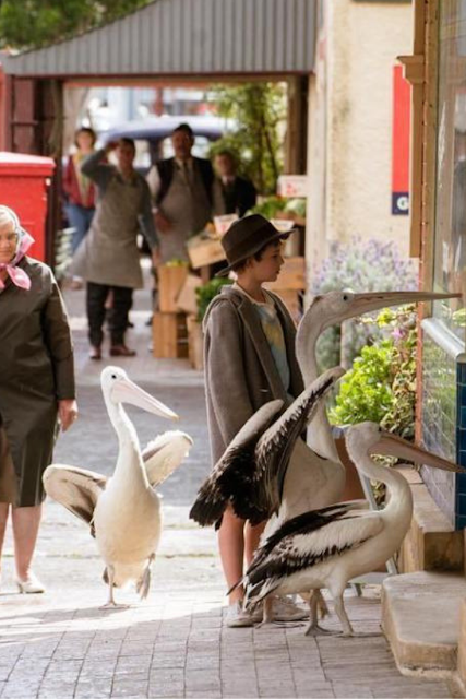 Storm Boy Movie Pelicans Boy on Street Scene