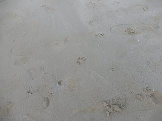 Marina Di Pisaの猫の足跡