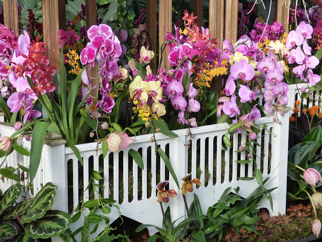 Orchid Festival at Kew Gardens Princess of Wales Conservatory 2018