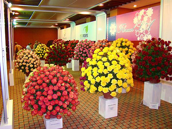flores de ecuador