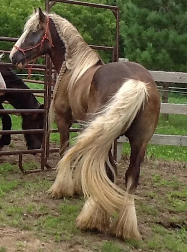 Inpressive Braids On Horses Photos Amp Videos The