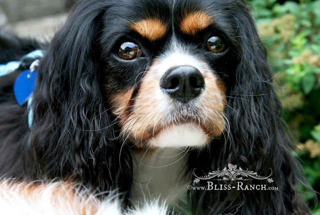 Cute Dog, Bliss-Ranch.com