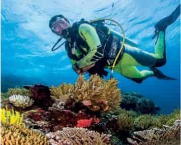 Pulau ini memang memiliki relief yang unik Wisata Alam di Pulau Komodo. Awas!! Disini Ada Naga
