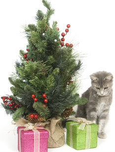 Cat With Gifts Under A Christmas Tree
