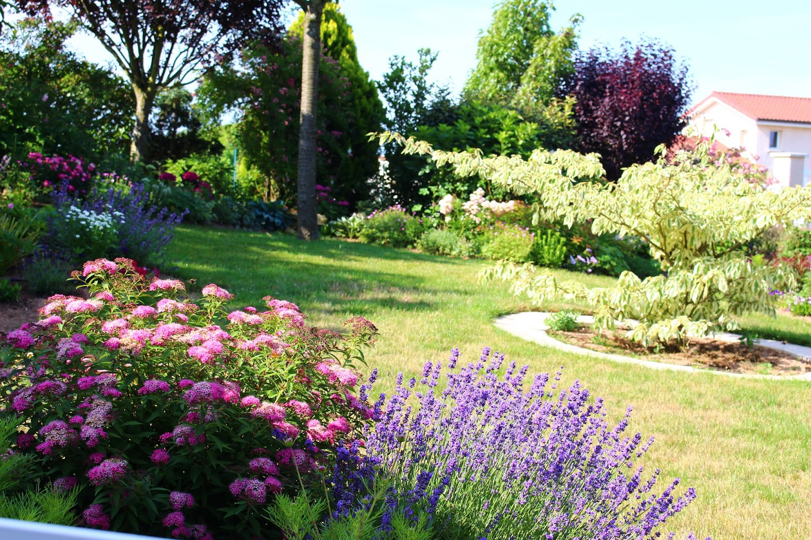 Roses Du Jardin Cheneland Spiraea Japonica Shirobana
