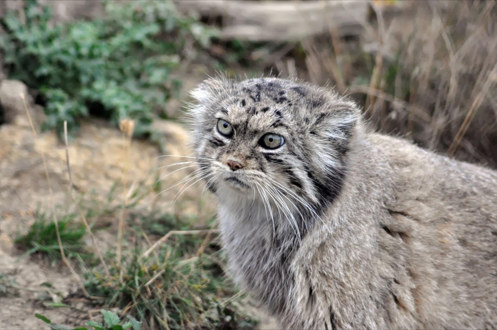 Lynx scale Manual