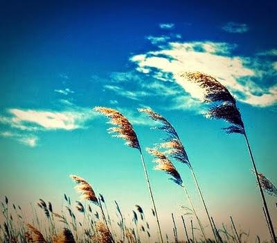 http://3.bp.blogspot.com/-bip5tnWn-1g/VT-zvo845AI/AAAAAAAAEpE/Kcz0EtT-c1s/s1600/langit-biru.jpg