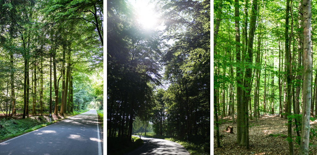 www.fim.works | Lifestyle-Blog | Waldstraße, Allee, Baumstraße, Bäume, Gegenlicht, Weg durch Wald, Straße durch den Wald