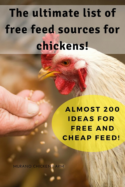 Feeding chickens for free. 200 ideas for cheap or free feed.