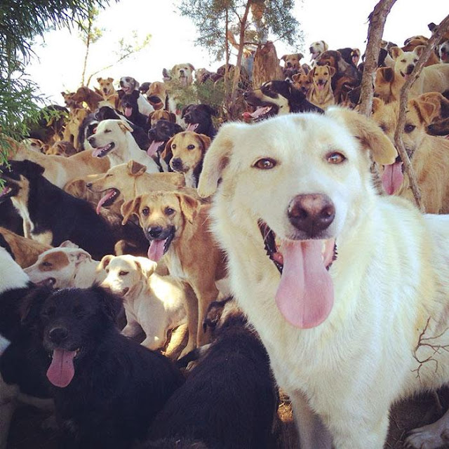 Thiên đường của loài chó
