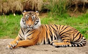 O tigre, o elefante, e a Cabalá da transformação