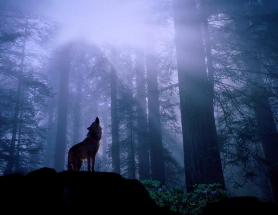 Arti Hewan Serigala Dalam Mimpi