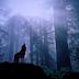 30 Arti Hewan Serigala Dalam Mimpi Menurut Primbon