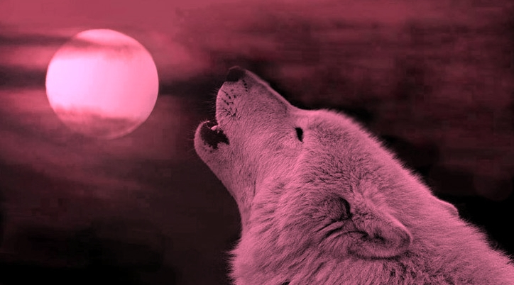 Why Is It Called A Pink Moon The Name Can Be Traced Back To North American Aboriginal Peoples Who Referred Full In April As After